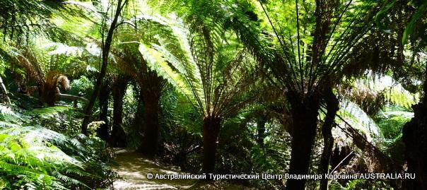 Дождевой лес - Великая Океанская Дорога
