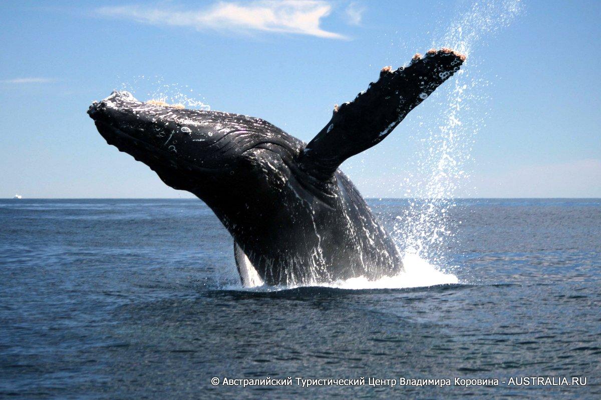 Член кита фото 20 фотография