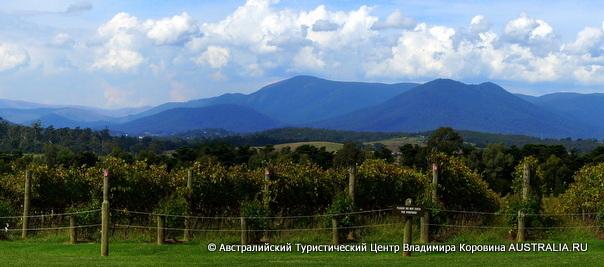 Долина Ярры - винодельня