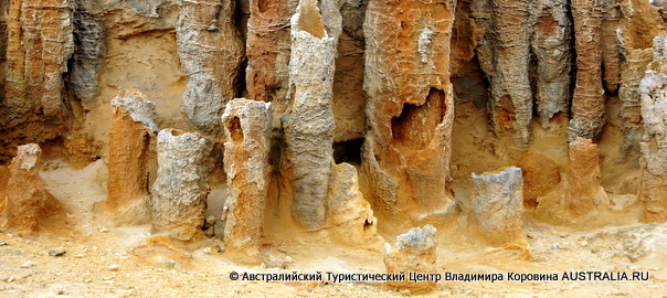 Окаменевший лес Мыс - Бриджвотер